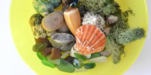 Seashell and Beach Glass Nature Collage