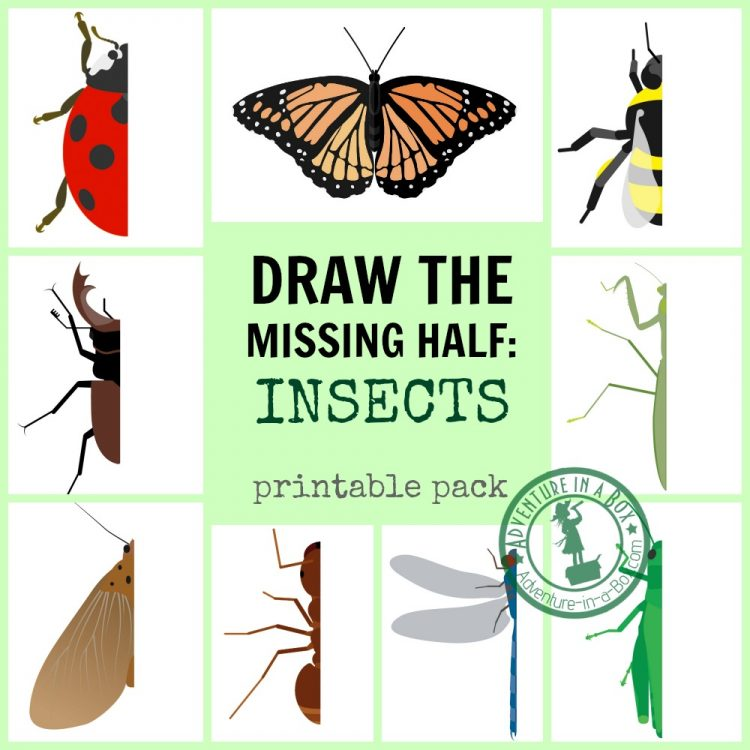 This image has an empty alt attribute; its file name is Insect-Drawing-Prompt-Printables-Draw-the-Missing-Half-FB-e1525974761208.jpg