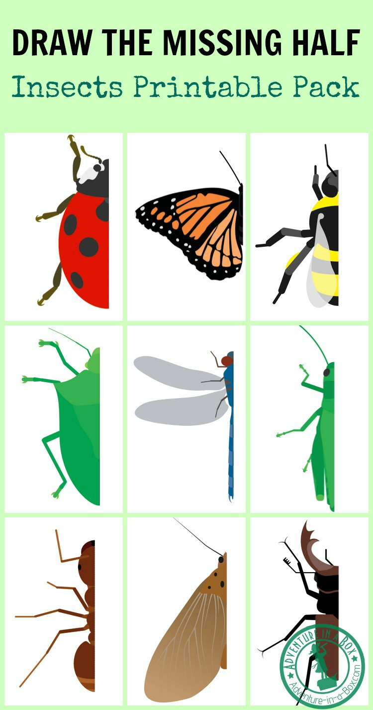 Draw the missing half of an insect to make the picture complete! These drawing prompts are good for children learning the concept of symmetry and, of course, for all young insect enthusiasts.