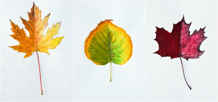 Autumn Leaf Art Prompts: Adults are giving it a go as well!