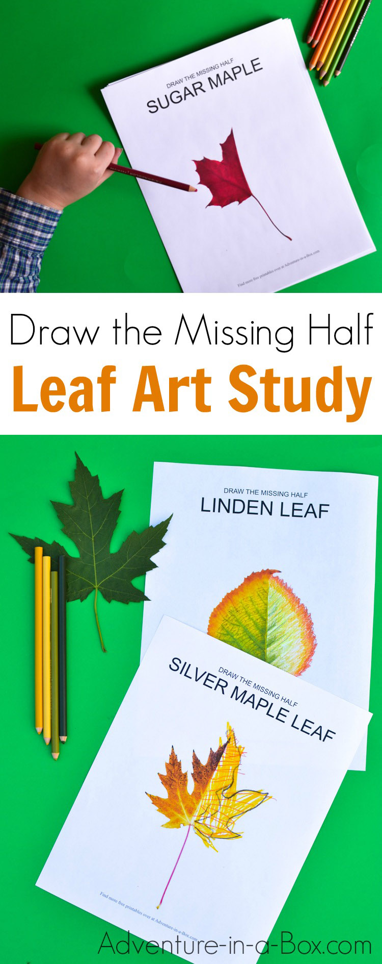 Challenge Your Kids To Draw The Missing Half Of A Leaf Fun Autumn Nature