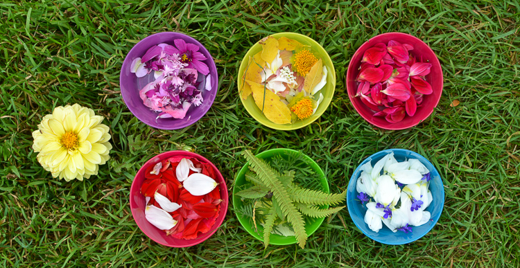 Flower Petal Canning: Collecting and sorting flowers into bowls.