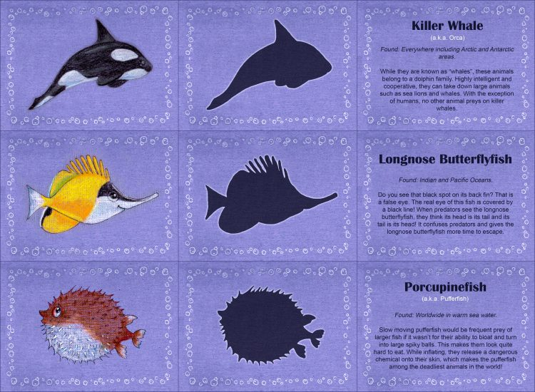 Life Under The Sea Preschool Matching Worksheet besides Ani in addition Frt likewise Around The House Cut And Paste Lesson Plan additionally Animal Shadow Matching. on shadow matching animals 2