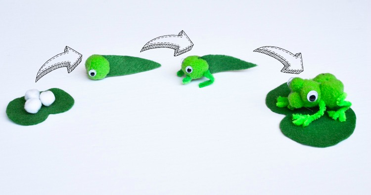 Frog Life Cycle Pom Pom Craft for Nature Studies