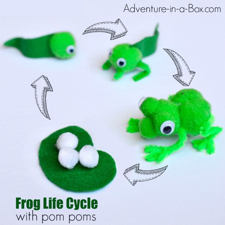 Illustrate the frog life cycle with pom poms and pipe cleaners by making pom pom frogs, tadpoles and eggs!  First, a pom pom frog was just a simple craft to do with kids, but we ended up making frog puppets and building a frog small world. #stem #homeschool #homeschooling #pompomcraft #kidscrafts