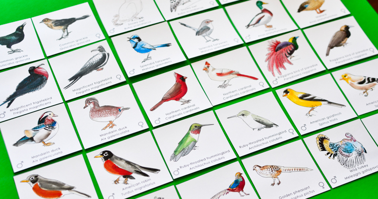 Bird Pairs: Printable Memory Match Game for Kids ...