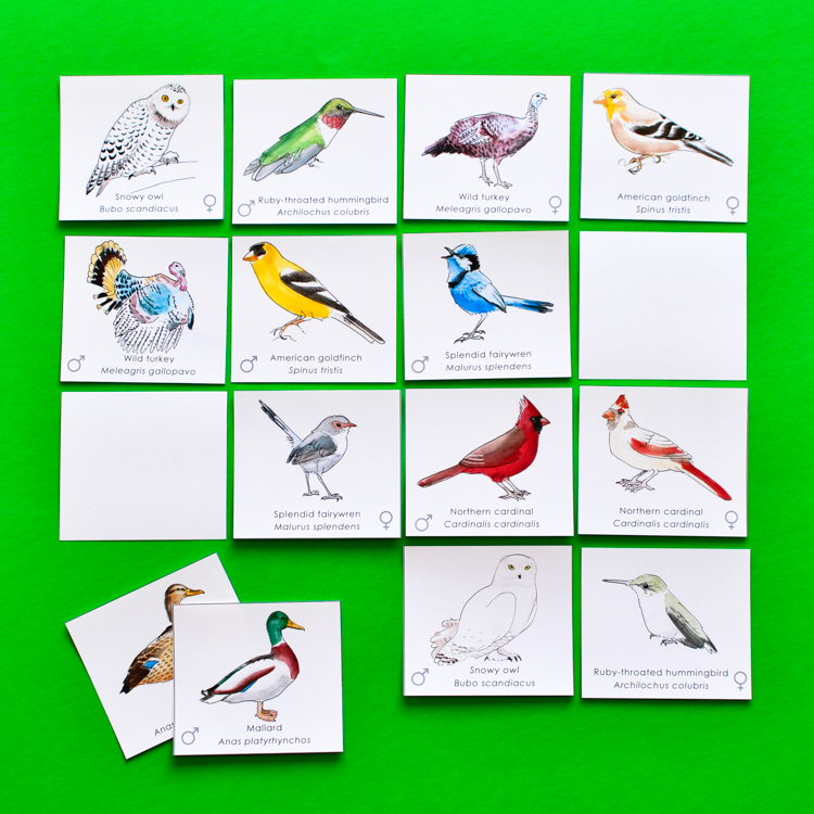Match a Pair of Birds : A Memory Game - Walmart.com ...