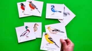 Male & Female Bird Pairs: Memory & Matching Game