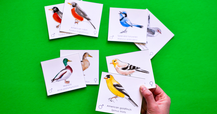 Bird Pairs: Printable Memory Match Game for Kids