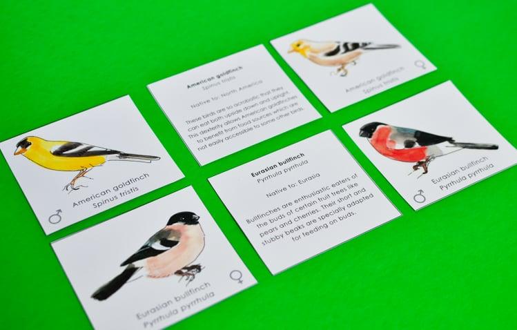 Match Male & Female Bird Pairs: Printable Memory Game