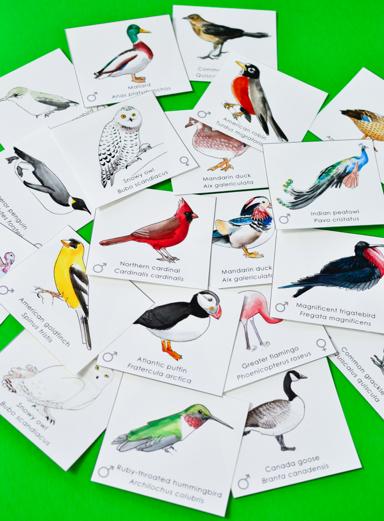 Bird Matching Game - Online Bird Memory Game for Kids.