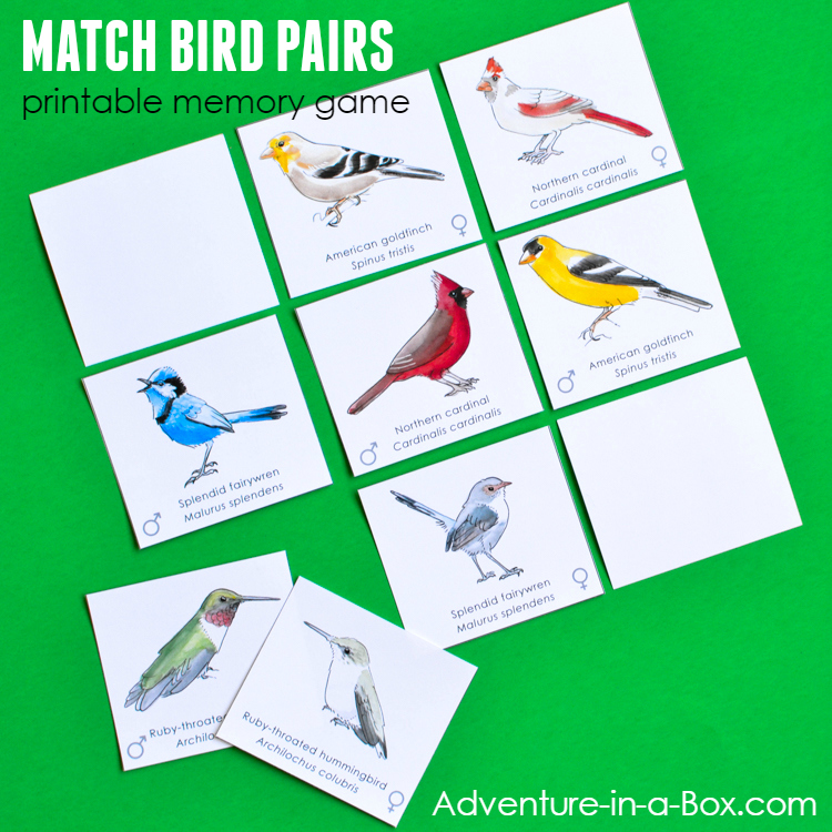 image relating to Printable Match Game named Fowl Pairs: Printable Memory Recreation Activity for Little ones Journey