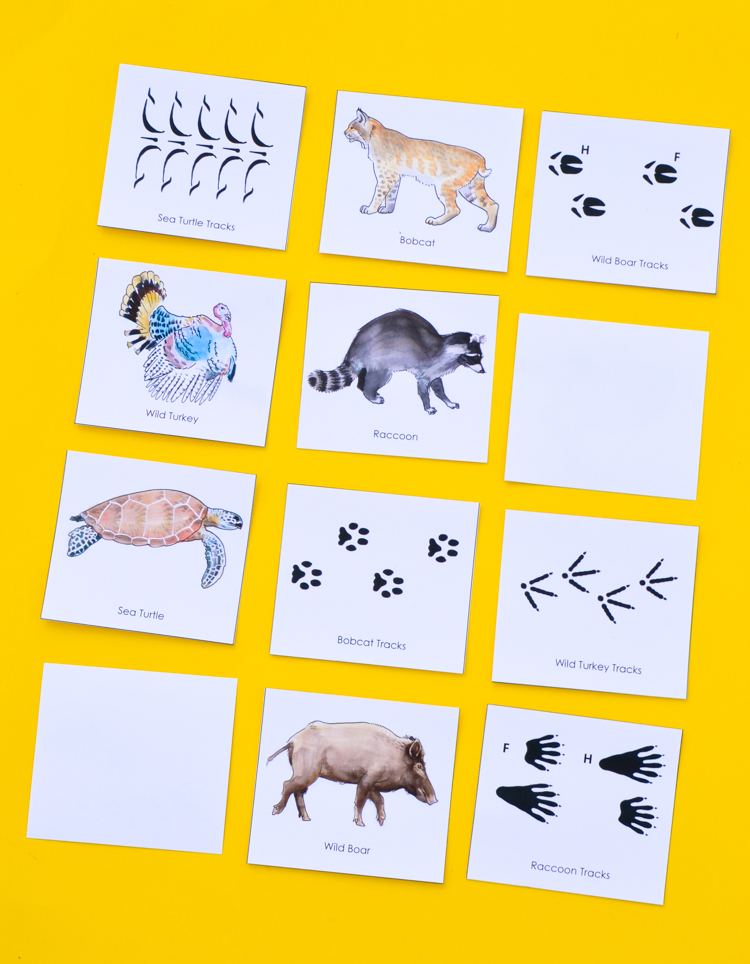 graphic regarding Printable Animal Tracks called Animal Songs: Printable Sport for Small children