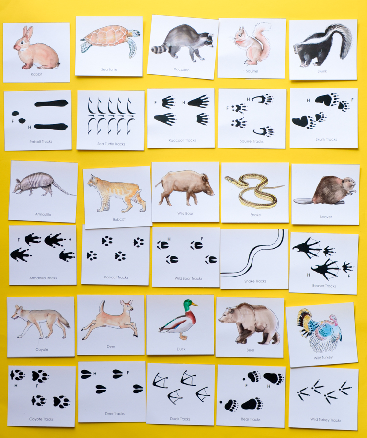 Inventive image for free printable animal tracks