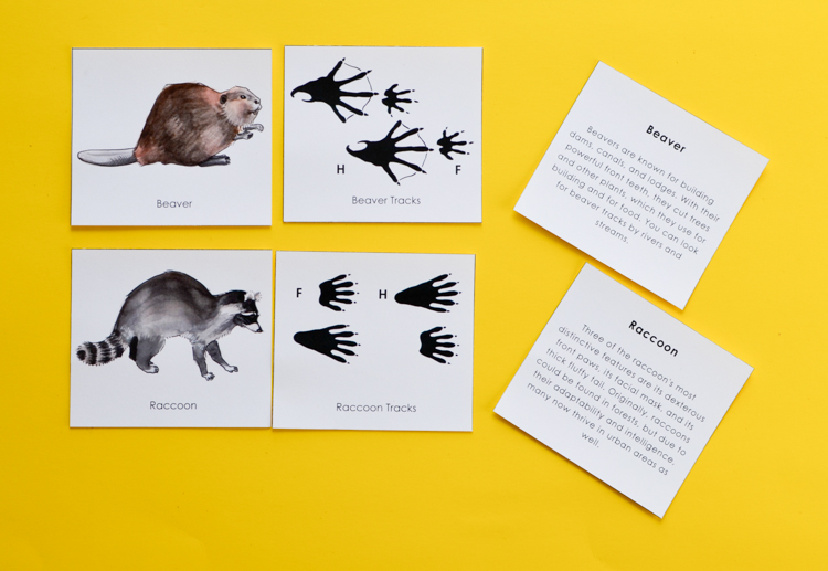 image regarding Animal Tracks Printable identify Animal Songs: Printable Match for Young children