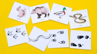 Animal Tracks: Printable Nature Game for Kids