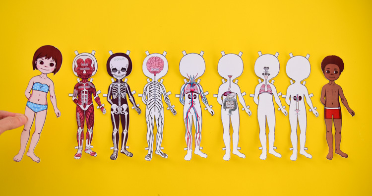 Anatomy Printable Paper Doll for Kids