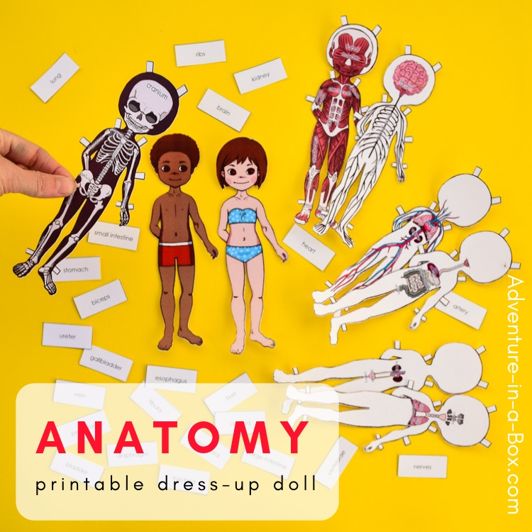 Anatomy paper dolls