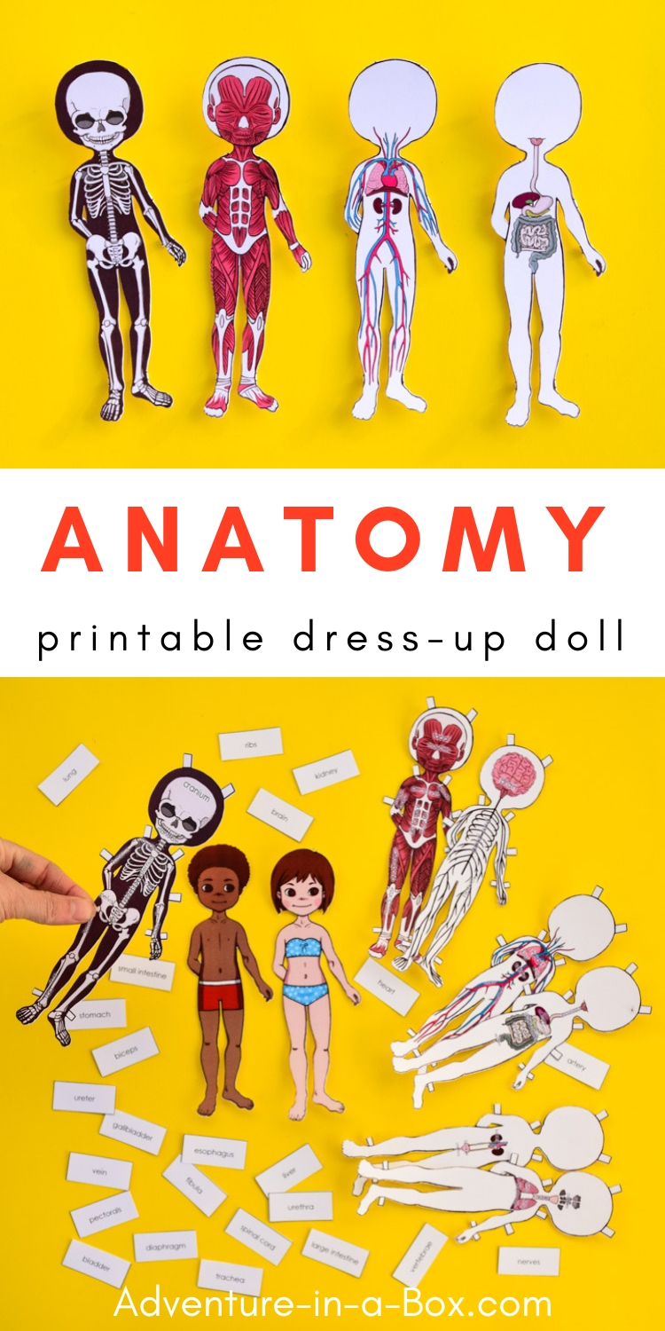 picture regarding Printable Paper Doll Body identify Anatomy Printable Paper Doll for Little ones Experience in just a Box