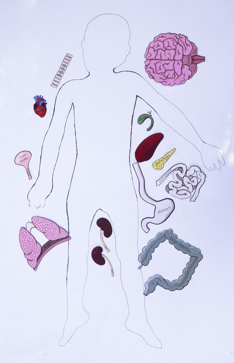 Free Printable Life Size Organs For Studying Human Body Anatomy With Children Adventure In A Box