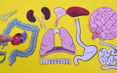 Printable Life-Size Organs for Studying Human Body Anatomy with Kids