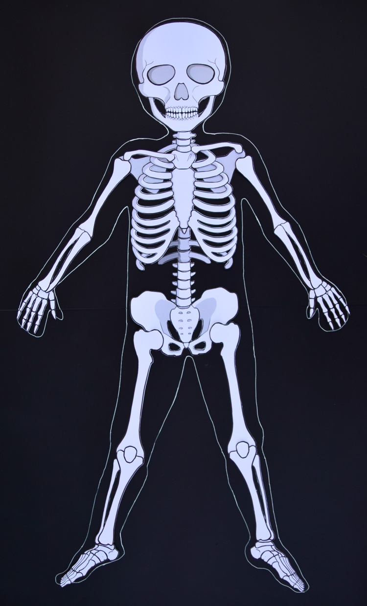 Wild image within life size printable skeleton