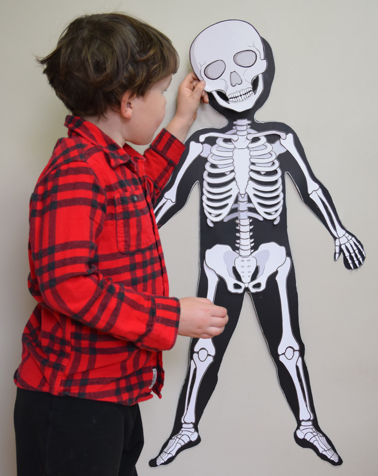 My son is finishing the skeletal model of his little sister. I think he enjoyed working on a vertical surface more because it gave a certain anthropomorphic ...