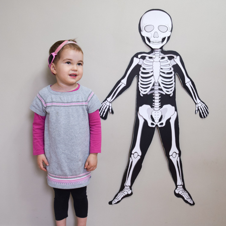 Get the Life-Size Skeleton!