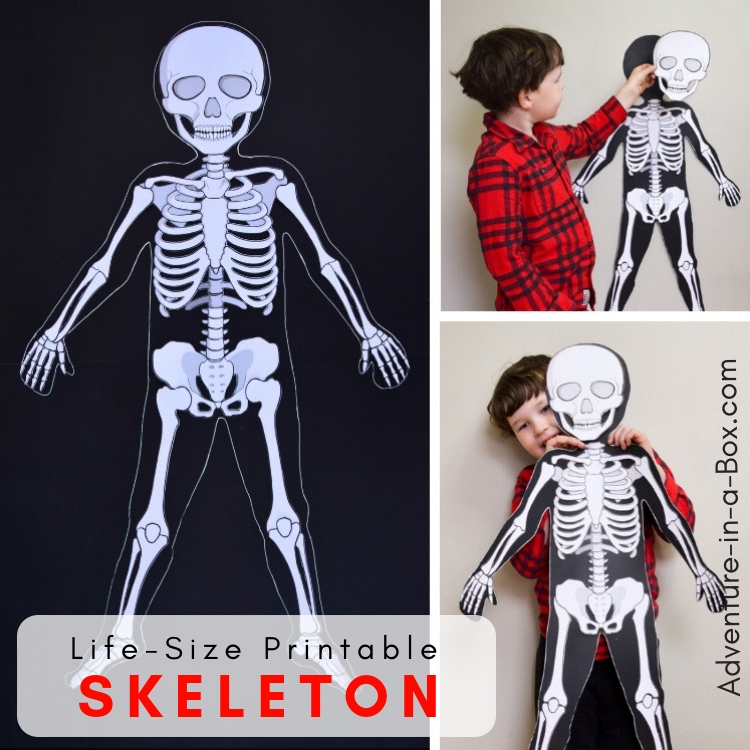 Life-size printable paper skeleton