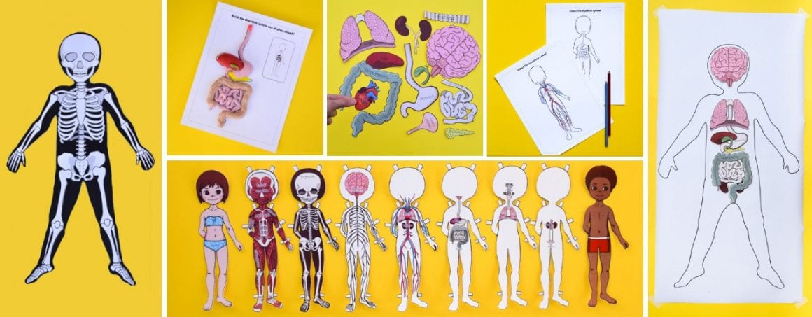 Anatomy bundle of printable activities