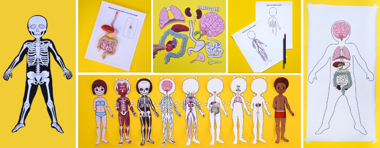 image regarding Printable Paper Doll Body called Anatomy Printable Paper Doll for Children Experience within a Box
