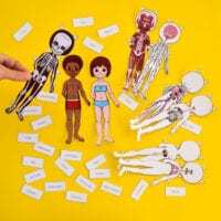 Anatomy Paper Dolls