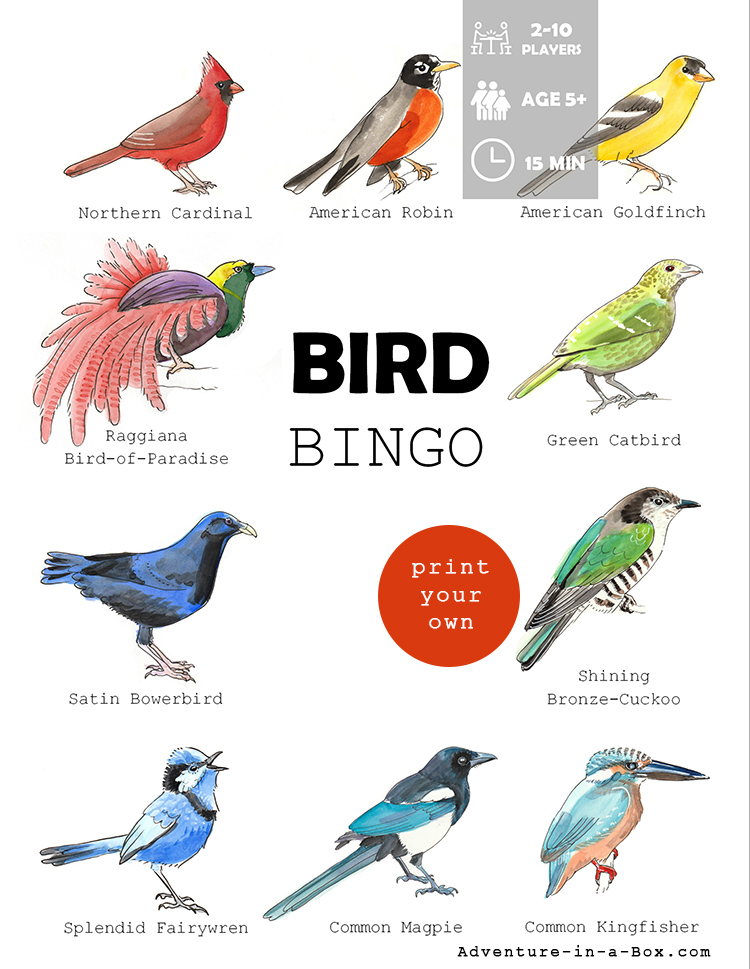 Bird Bingo: Printable Game for Kids