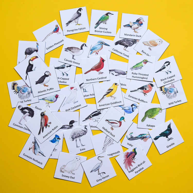 48 bird species in the game!