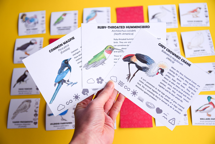 Bird Guess Who Information Cards