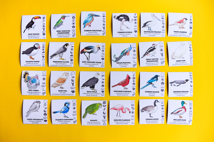 24 bird cards with watercolour illustrations