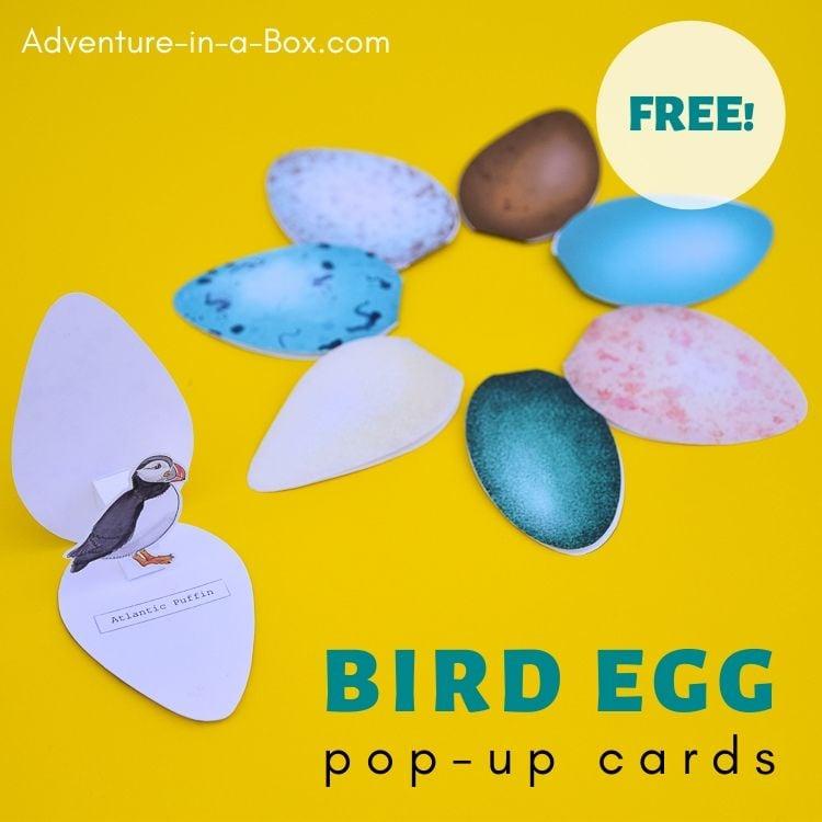 Bird Eggs Pop-Up Card