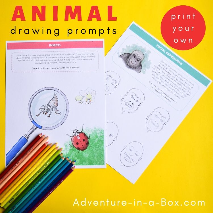 Animal drawing prompts for kids