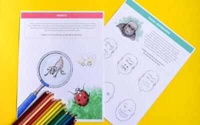 Animal Drawing Ideas