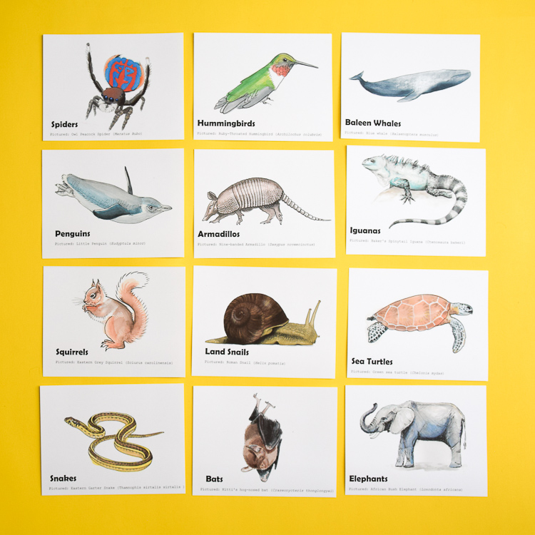 12 animals included in the printable animal trivia game