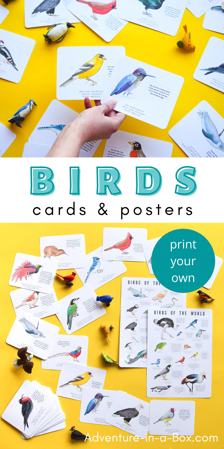 Birds Flashcards and Posters