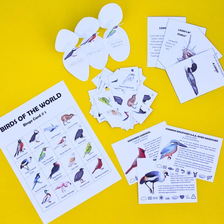 Bird unit study