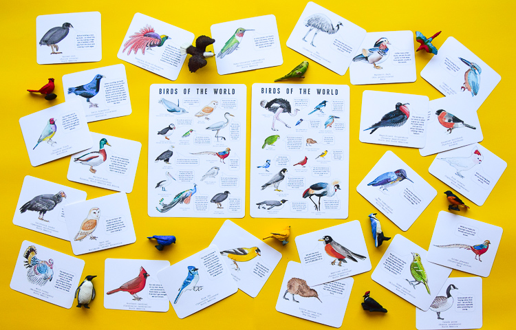 Fifty watercolour bird flashcards and six watercolour bird posters