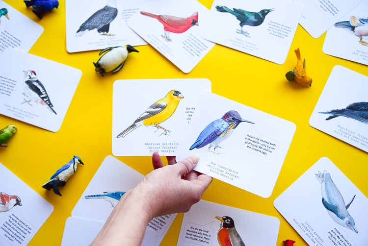 Birds identification cards with fun facts