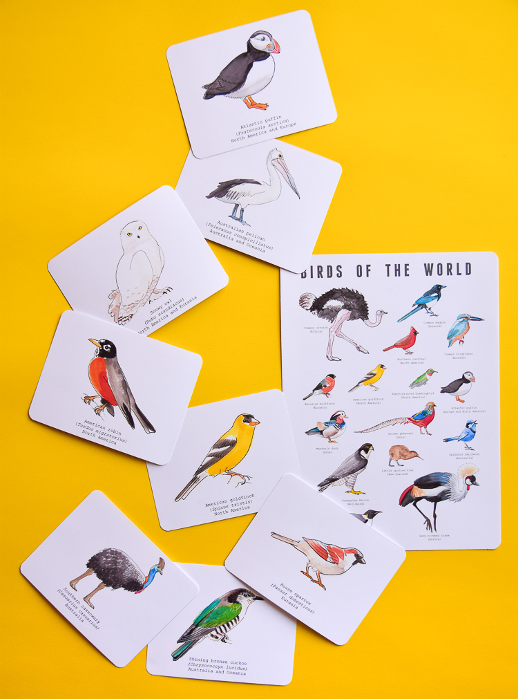 Watercolour bird flashcards