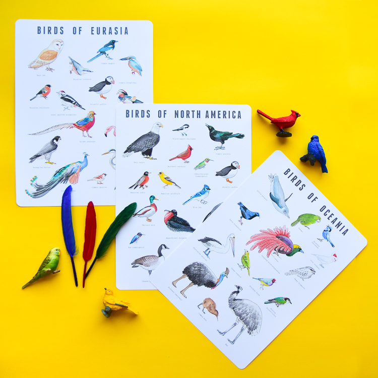 Watercolour bird posters with birds of Eurasia, birds of North America, and birds of Australia
