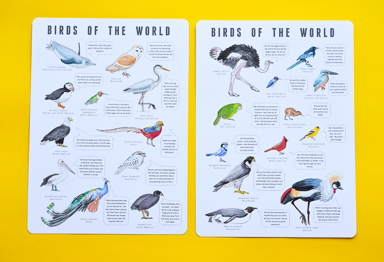 Bird posters with interesting facts