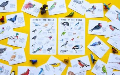 Watercolour Bird Flashcards