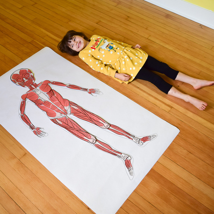 Life-size muscular model for kids is complete