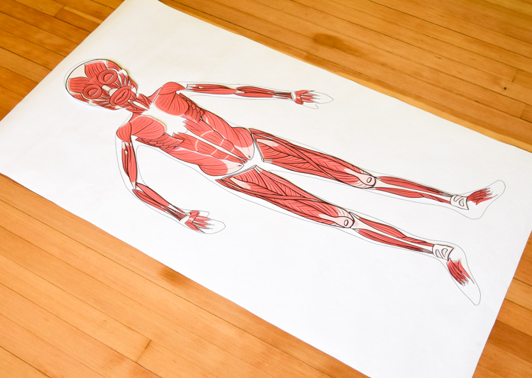 Life-size paper muscular model
